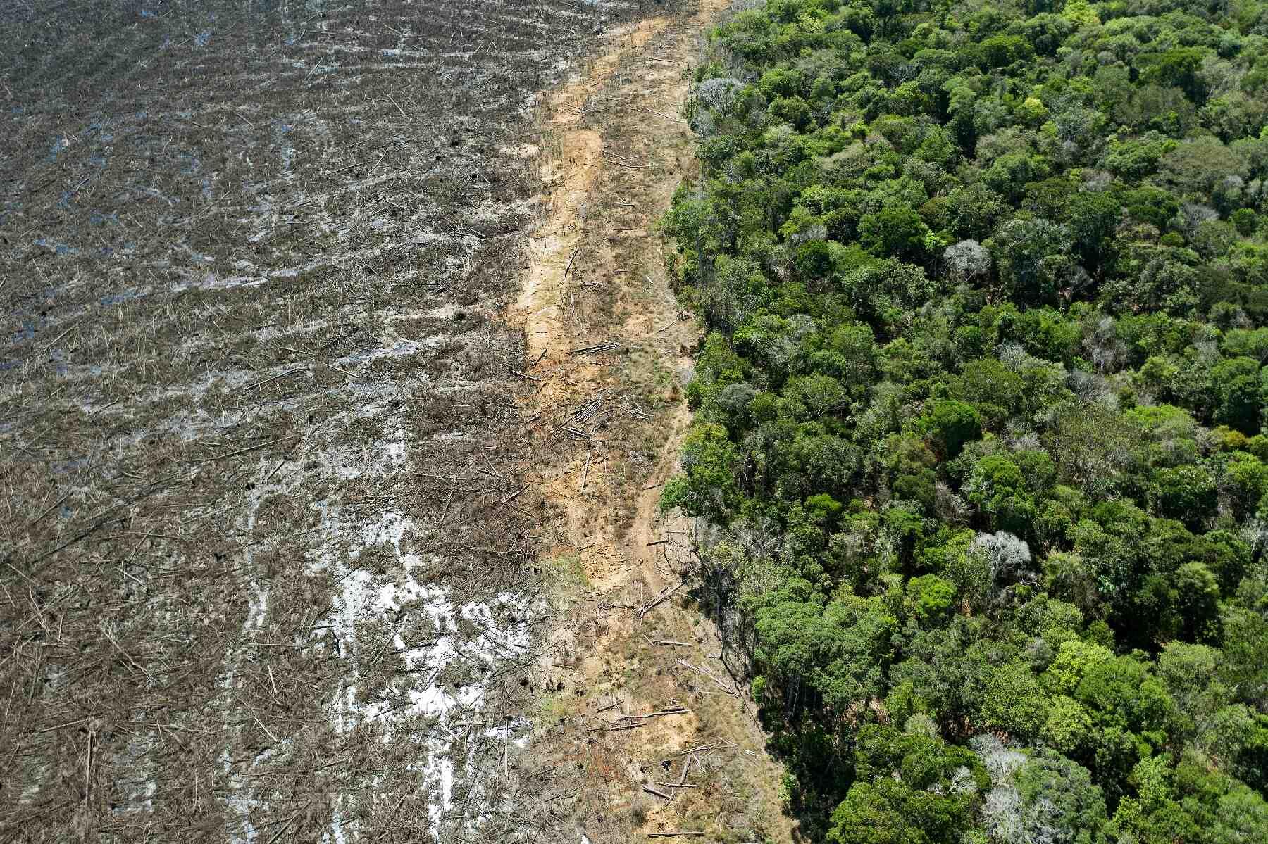 Quels sont les impacts environnementaux dus à la quantité de forêt ?